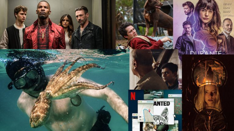 What to Watch Today on Netflix: My Octopus Teacher, The Disciple and More