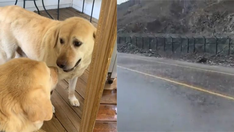 Watch: Dog Gets Attitude From Other Pooch, Fake Rain in Dubai