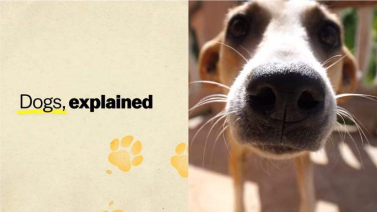 Netflix's Explained Season 3 Episode 4 Recap: Man's Best Friend 'Dogs'