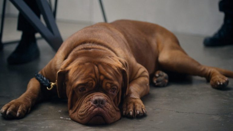 Turner and Hooch Episode 7 Recap: To Serve and Pawtect